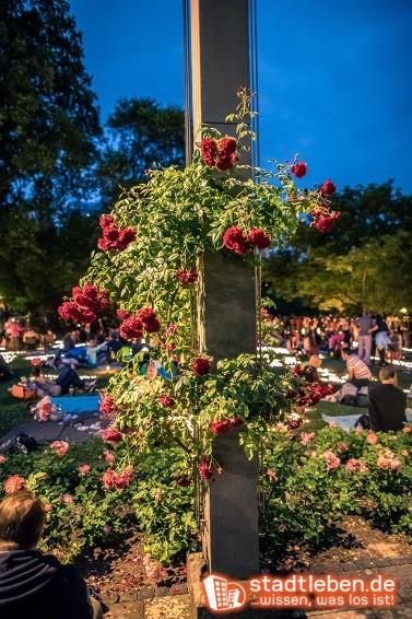 08.06.2018 - Rosen- und Lichterfest, Palmengarten