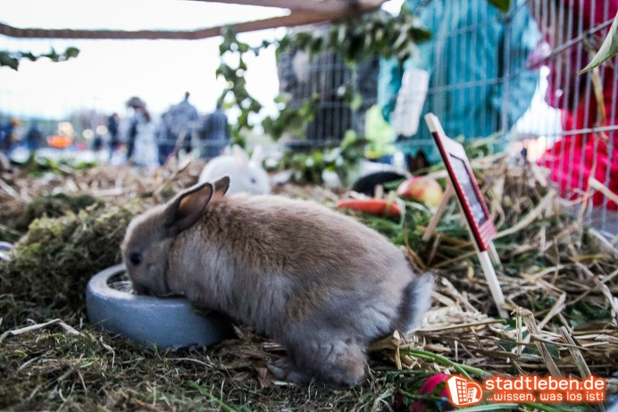 Kaninchen am Fressnapf