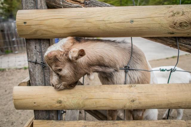 Tierpark Fasanerie