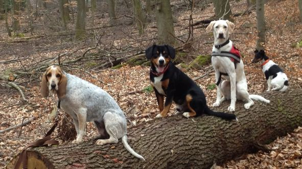 Hund sitzen auf einem Baumstamm