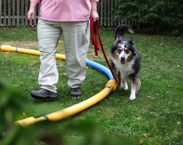 Hund beim Training mit Besitzer