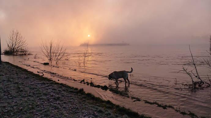Sonnenaufgang mit Hund