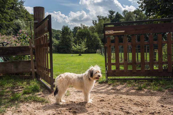 Hund steht vor dem Eingang