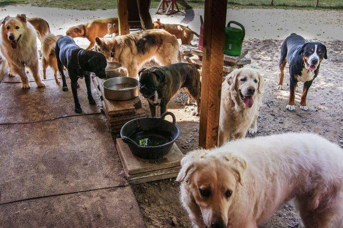 Hunde am Trinken und entspannen