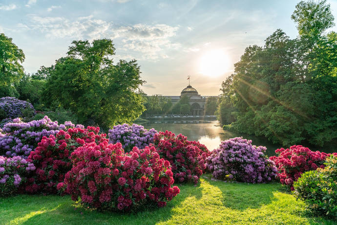Wiesbaden, Sonne, Natur, Blumen, Kurpark