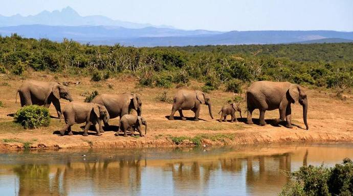 Elefantenherde am Wasser, junge Elefanten