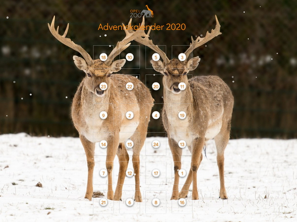 Opel-Zoo Adventskalender