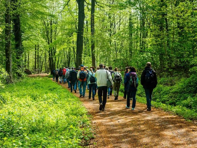 Wald, Natur, Menschen, Gruppe