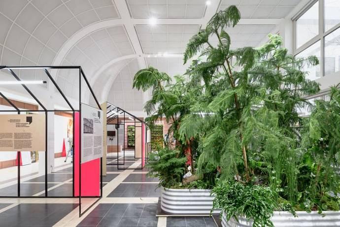 Austellung, Museum, grün, Pflanzen
