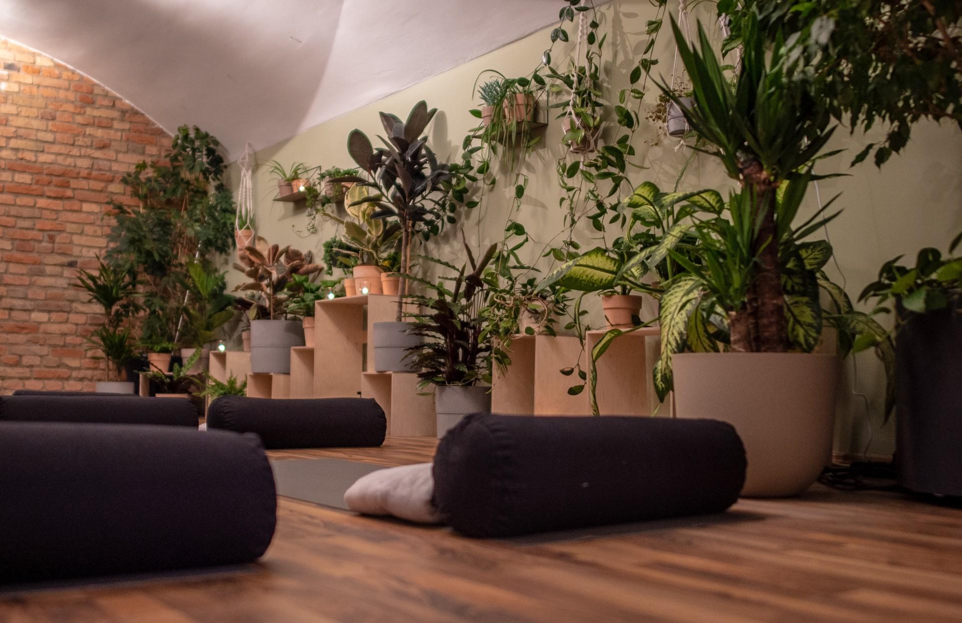 Dschungel Yoga