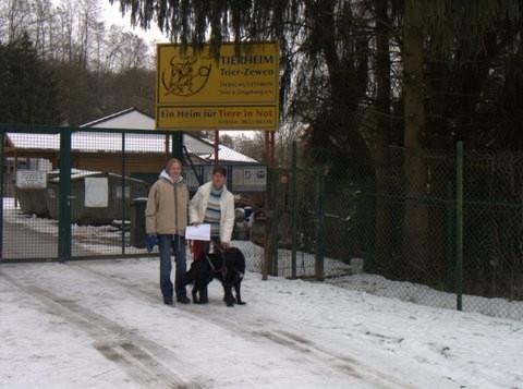 Tierheim Trier Welpen
