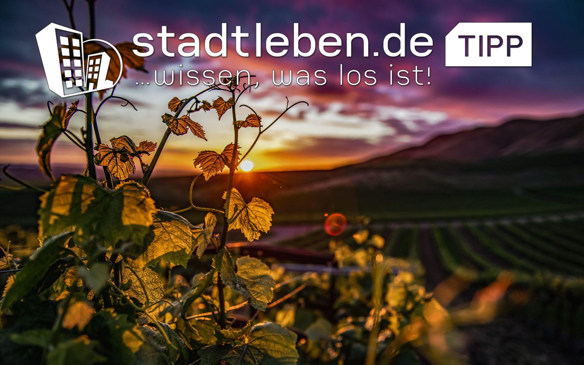 Weingut bei Sonnenuntergang