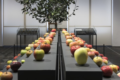 Freier Samstag Im Museum Wiesbaden Mit Apfel