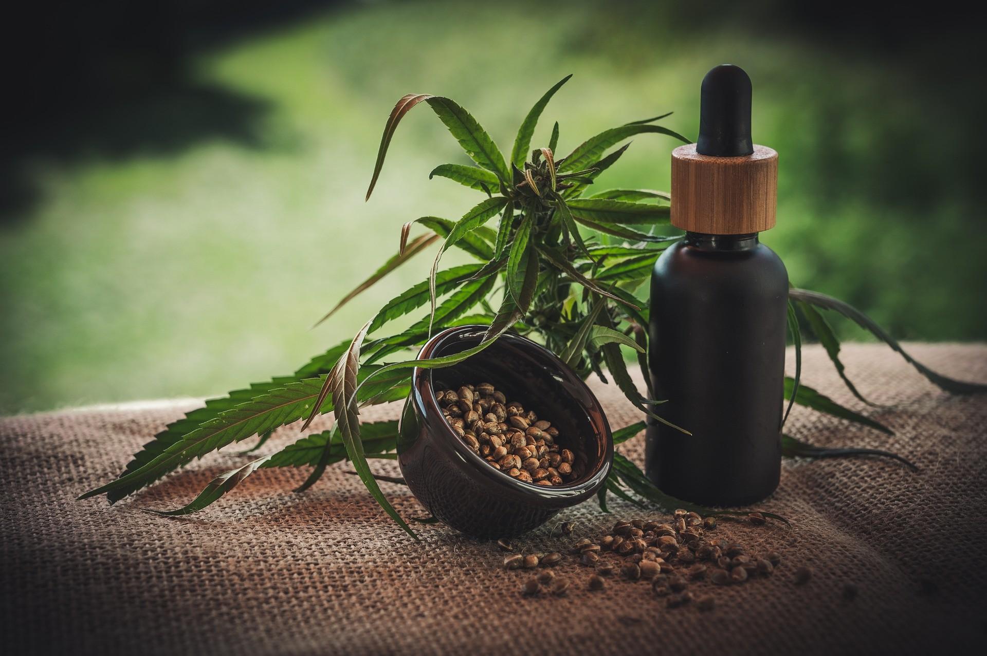 Bereits im Altertum war die Hanfpflanze geschätzt und heute erlebt das Naturprodukt wieder geradezu einen Höhenflug.