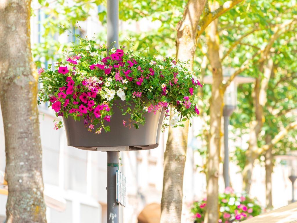 Blumen, Stadt, Weiss, Rosa, Pink
