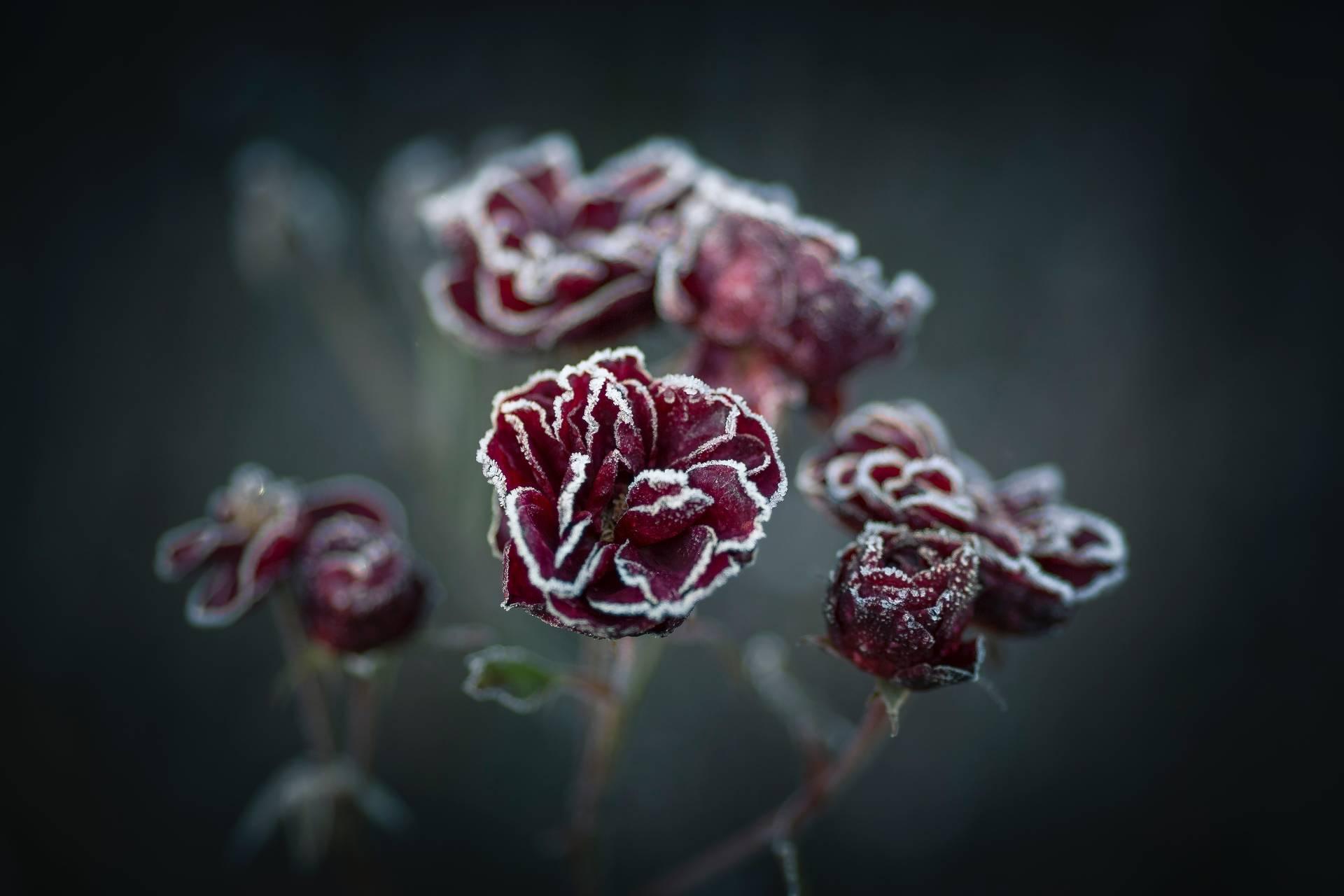 Auch bei frostigen Temperaturen kann der Garten blühen