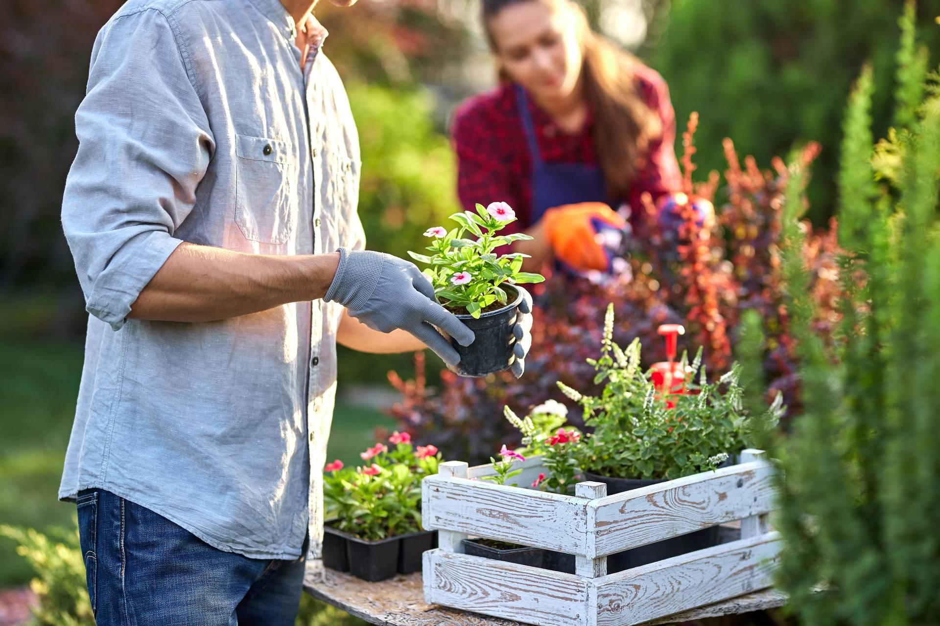 Wer sich dafür entscheidet, Obst und Gemüse anzubauen, muss zu Beginn der Gartensaison ein wenig mehr Zeit investieren