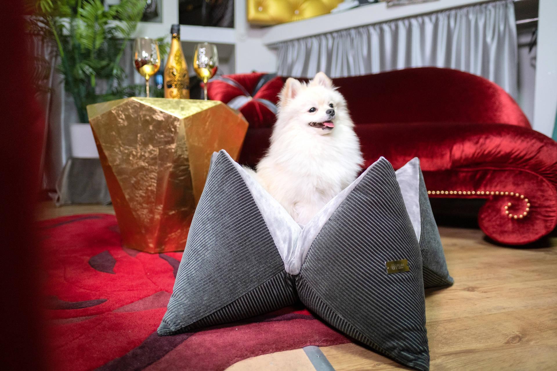 Die flauschigen FLUMS sind beliebt bei großen und kleinen Hunden
