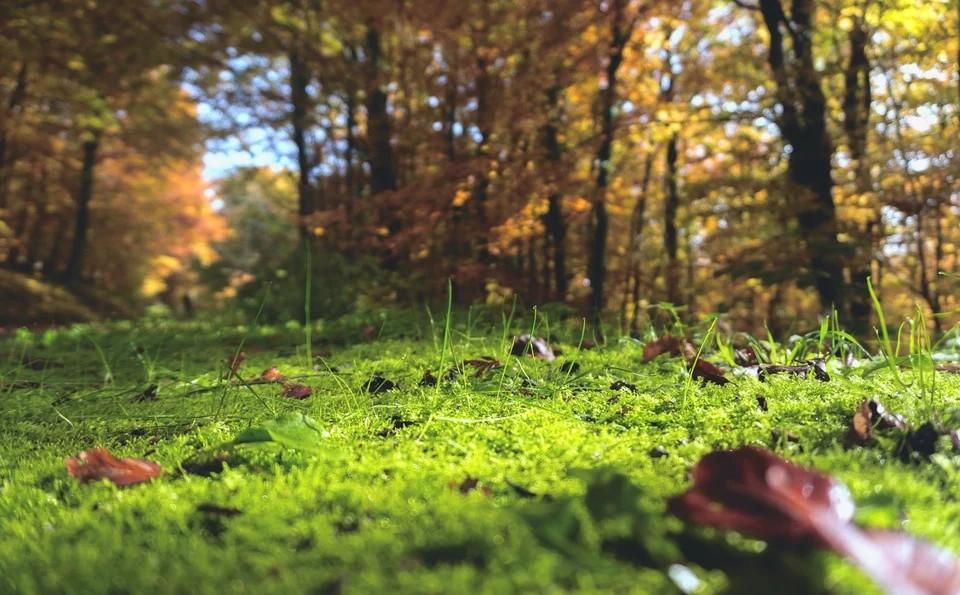 Waldboden, Wald, Natur, Moos, Gras, Lichtung, Bäume, Umwelt, Flora