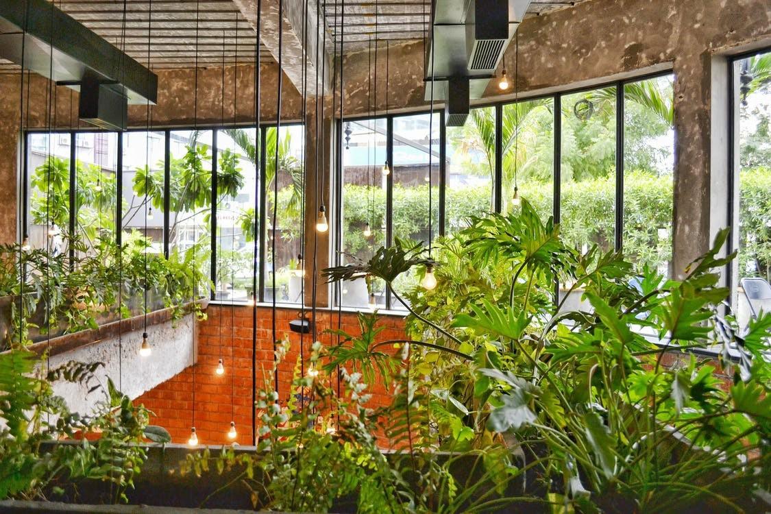 Grüne Pflanzen in der Nahaufnahme